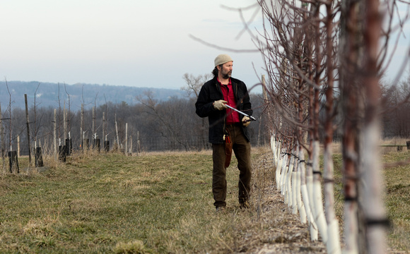 South Hill Cider Pruning